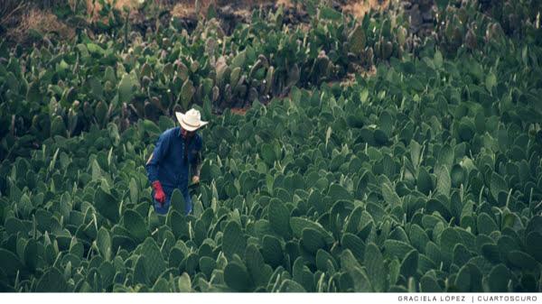 El Tmec y el campo mexicano