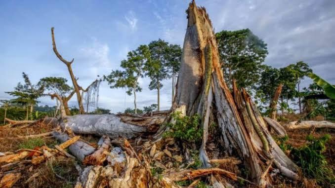 Organizaciones, comunidades y colectivos urgen al Ejecutivo Federal a detener la construcción del Tren Maya y respetar la Libre Determinación de las comunidades