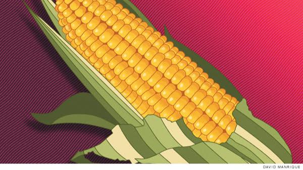 El juicio contra el maíz transgénico en México