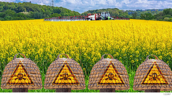 La prohibición gradual del glifosato y el maíz transgénico