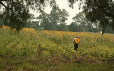 Organizaciones piden a juez rectificar fallo a favor de Monsanto para evadir el decreto de prohibición del Glifosato